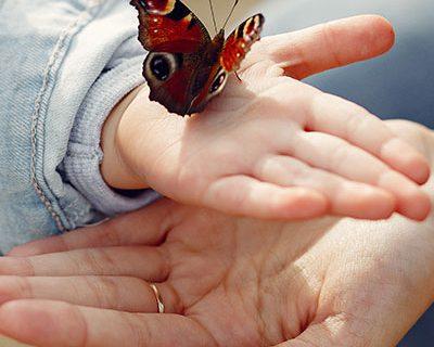 kid-butterfly